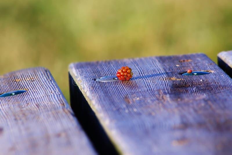 Löst hallon uppe på picknickbänk royaltyfri foto