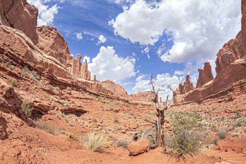 Löst landskap i bågar nationalpark, Utah, USA royaltyfri foto