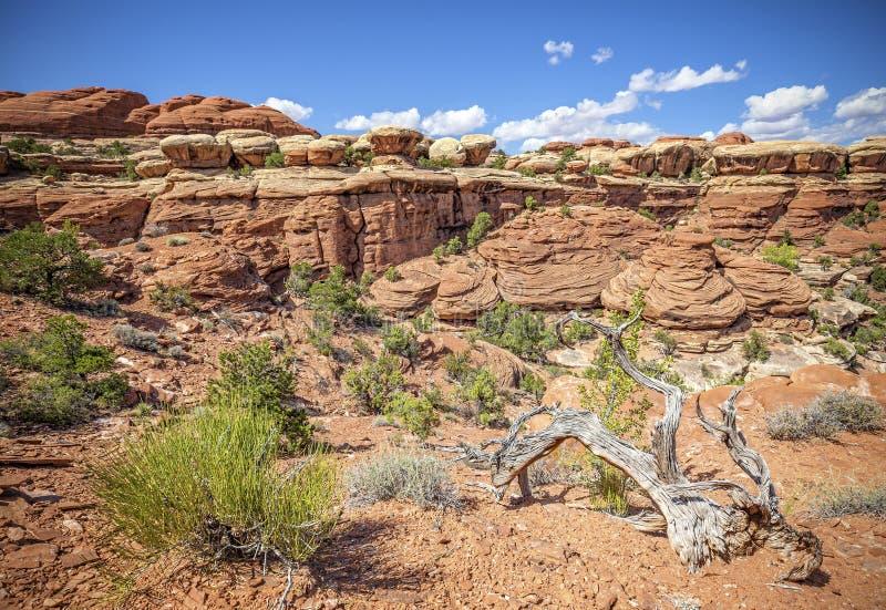 Löst landskap i den Canyonlands nationalparken arkivbild
