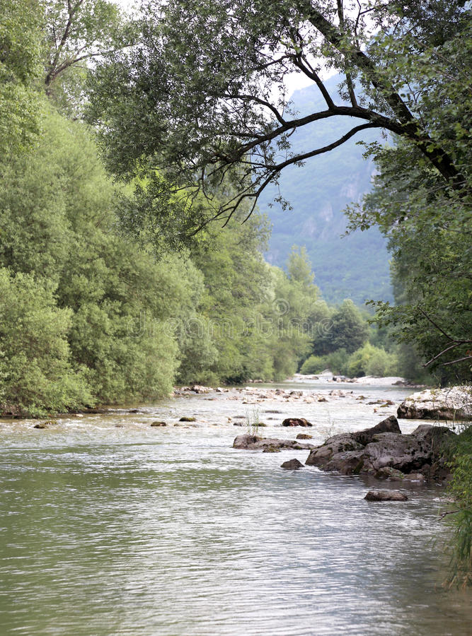Löst landskap med bergströmmen och träd arkivfoton