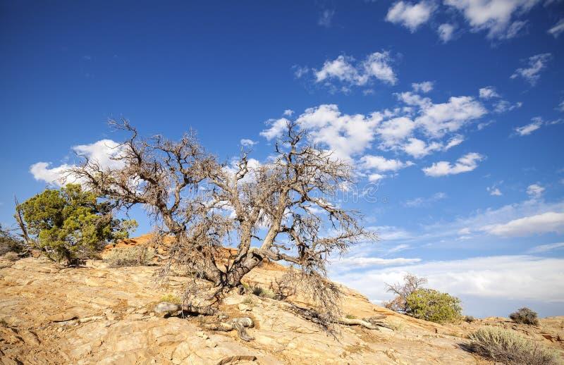 Löst landskap med det torra trädet och blå himmel royaltyfri bild