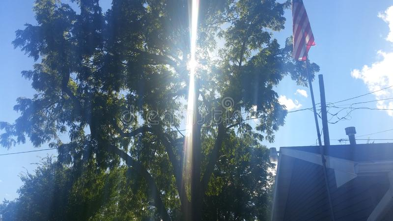 Löst ljus till och med träd arkivfoton