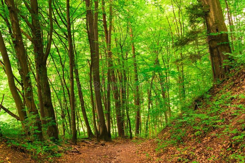 Lövfällande blandad skog - och barrträd, landskap på en su arkivfoto
