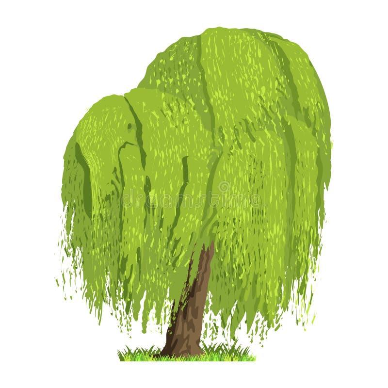 Lövfällande träd i fyra säsonger - vår, sommar, höst, vinter Natur och ekologi Grön trädillustration royaltyfri illustrationer
