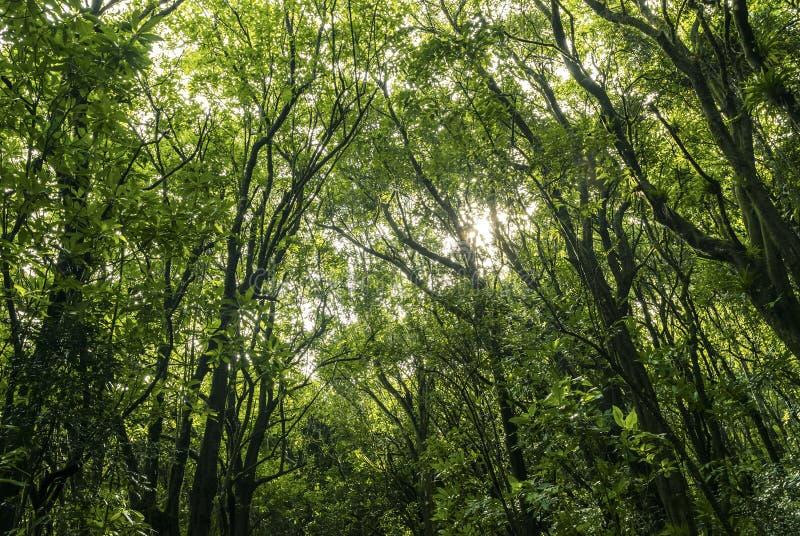 Lövrik grön skog med eftermiddagsolen i baksidan arkivbilder