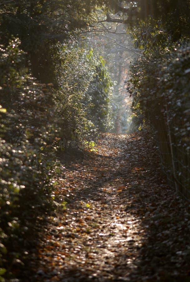 Download Lövrik passageway fotografering för bildbyråer. Bild av befrielse - 512367