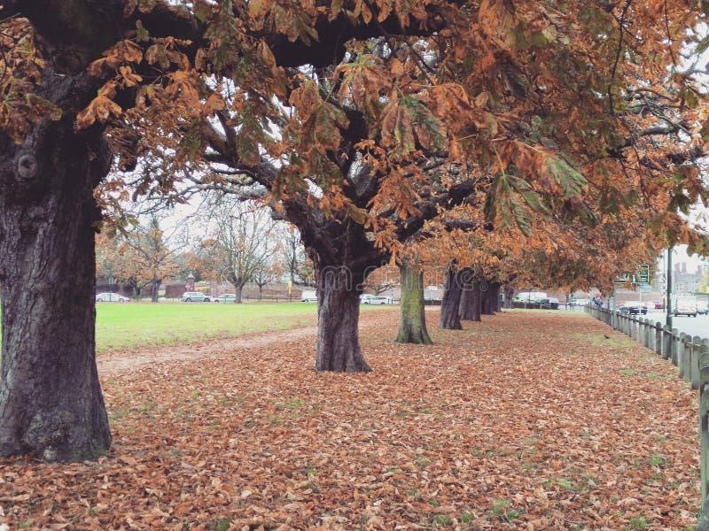 Lövrika Autumn Hampton Court Green arkivfoton