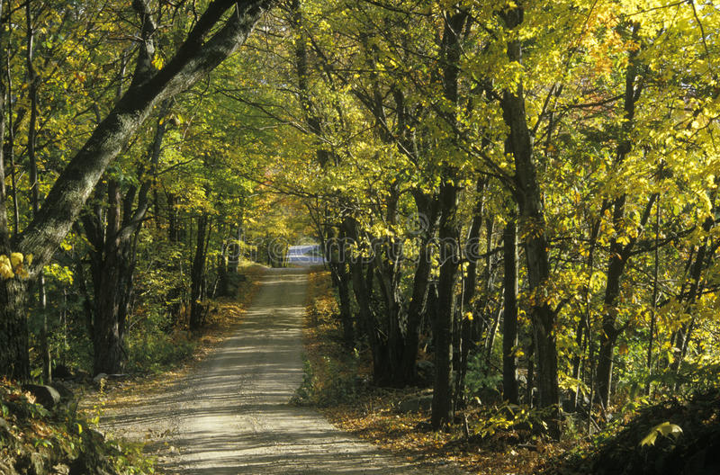 Lövrika träd skuggar en smal väg i lantliga New England royaltyfri fotografi