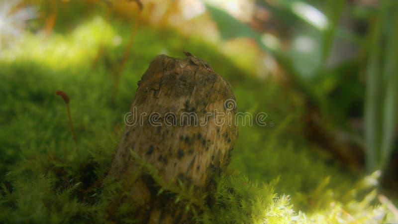 Lövruska på grön mossa arkivfoton