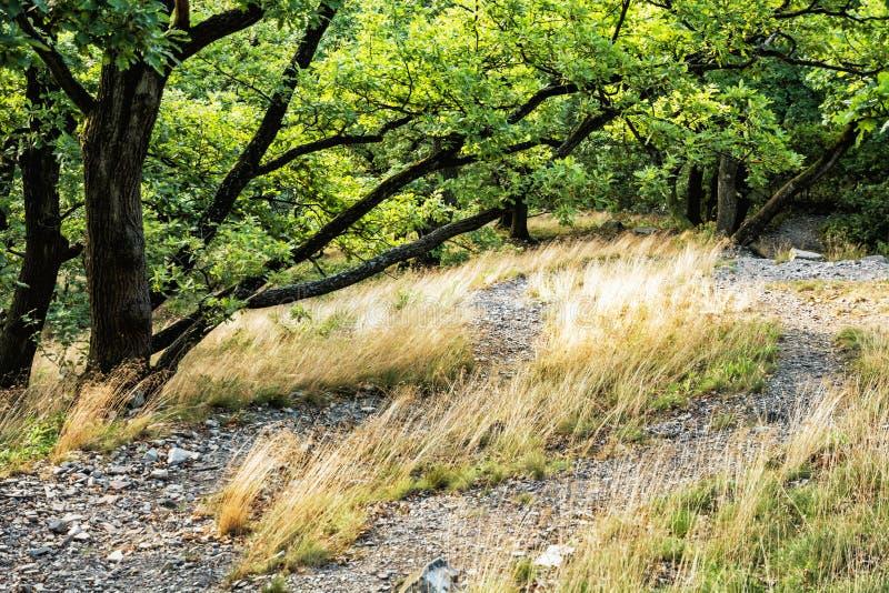 Lövskog i sommar, torrt gräs och gröna träd royaltyfri fotografi