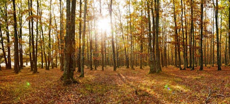 Lövskogpanorama i höst royaltyfri bild