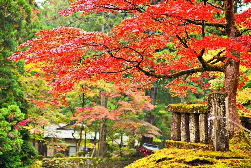 Lövverk i Nikko fotografering för bildbyråer
