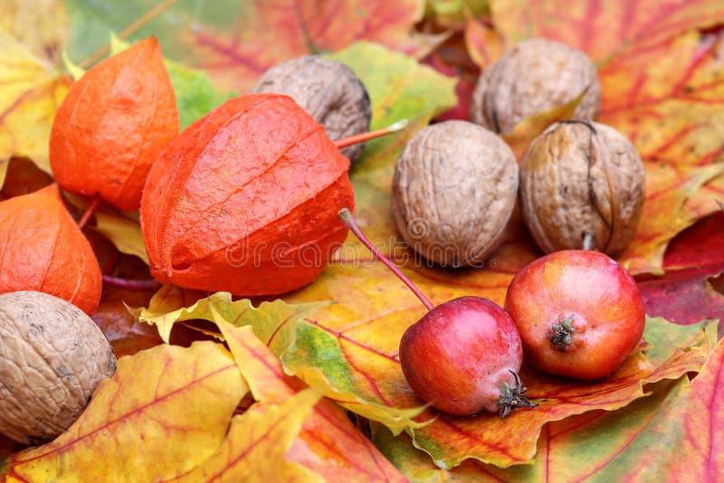 Lövverk med valnötter och små äpplen royaltyfria foton
