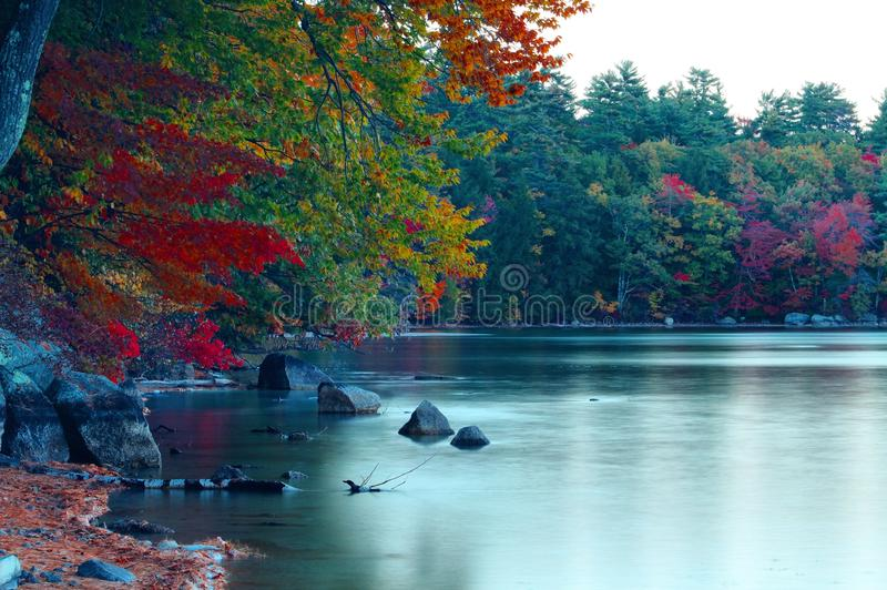 Lövverk på sjön royaltyfri foto