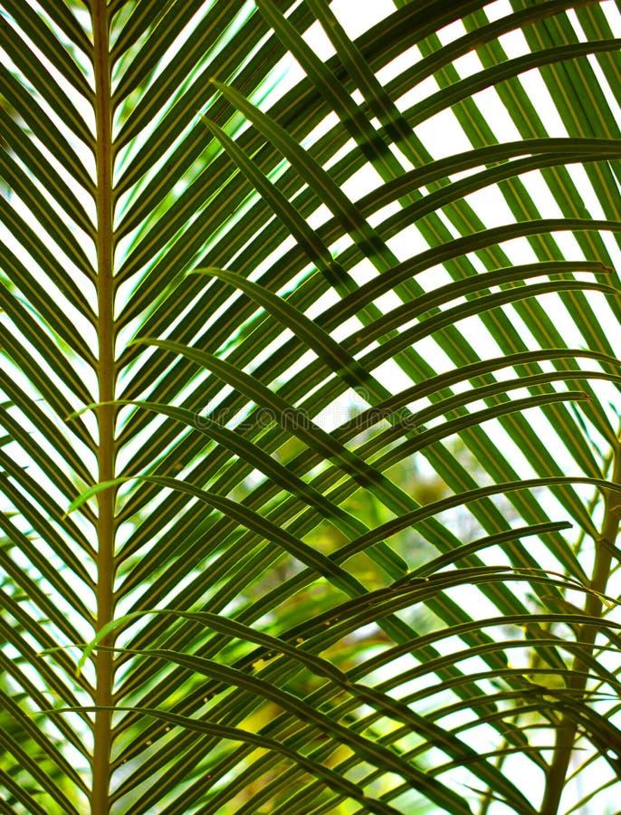 Lövverkmodell av tropiska palmblad arkivfoto