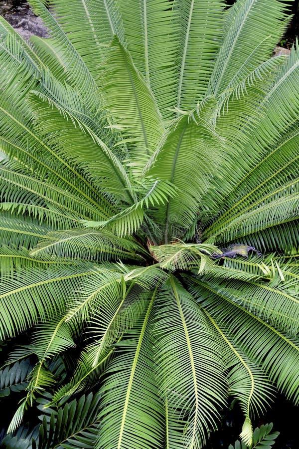Lövverkmodell av tropiska palmblad royaltyfri fotografi