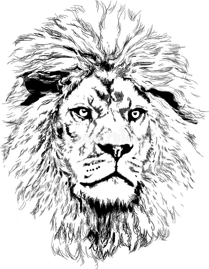 Löwe mit der großen Mähne lizenzfreie stockbilder