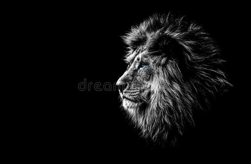 Löwe in Schwarzweiss lizenzfreie stockfotos