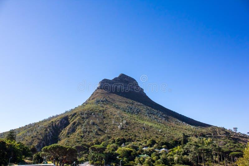 Löwekopf, Kapstadt lizenzfreie stockbilder