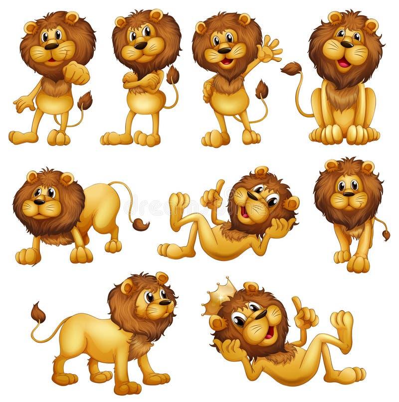 Löwen in den verschiedenen Positionen lizenzfreie abbildung