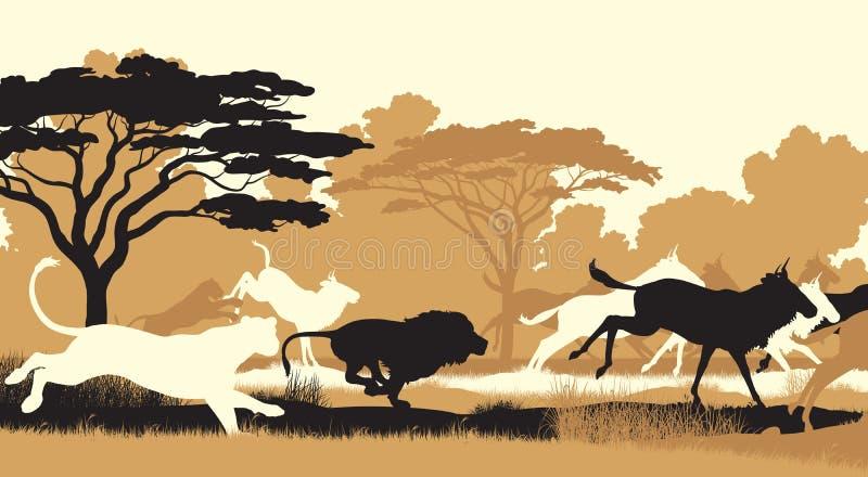 Löwen, die Gnu jagen stock abbildung
