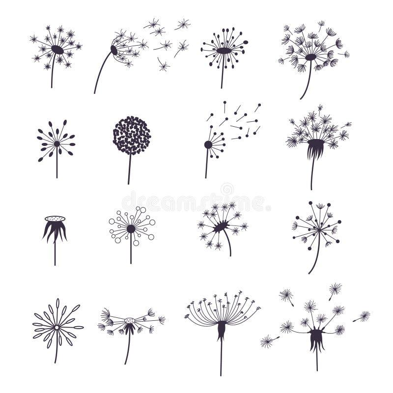 Löwenzahn-flaumige Blume und Samen eingestellt Vektor vektor abbildung