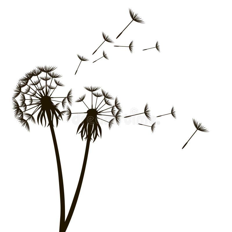 Löwenzahn-flaumige Blume und Samen Vektor stock abbildung