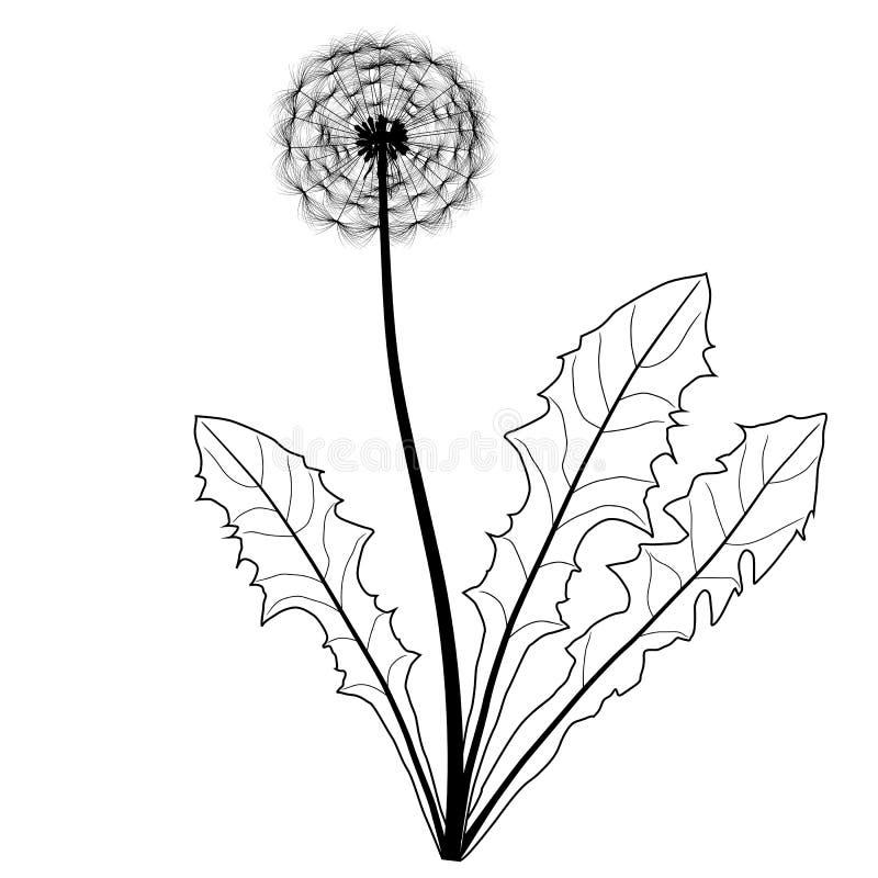 Löwenzahn Schwarzweiss vektor abbildung