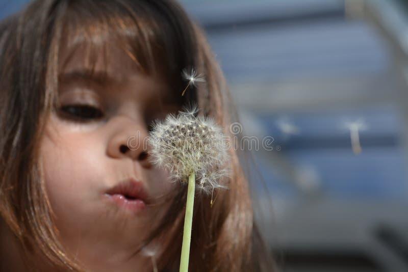 Löwenzahnanlage Schlag des kleinen Mädchens lizenzfreies stockbild