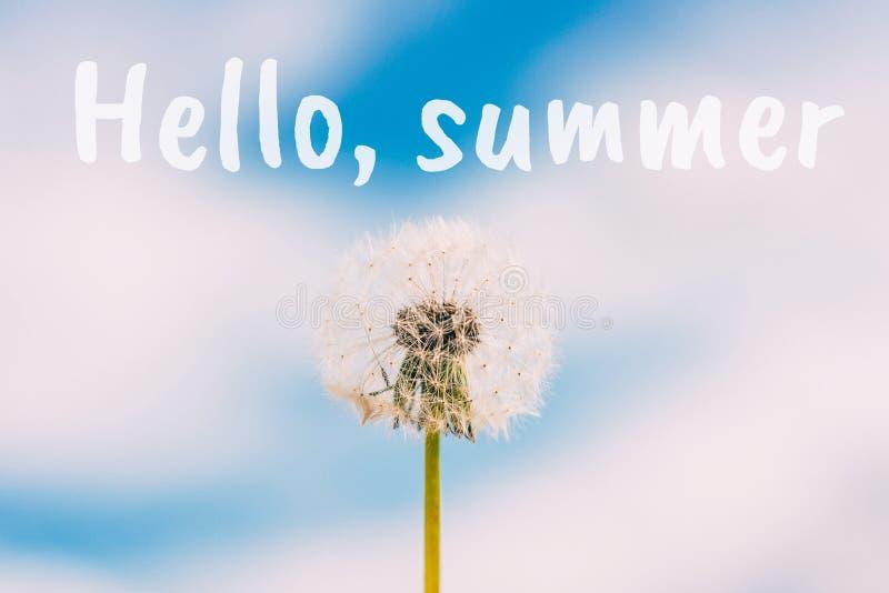 Löwenzahnblume gegen blauen Himmel mit Wolkenhintergrund Hallo Sommertext lizenzfreies stockfoto