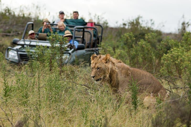 Löwesavanne Afrika lizenzfreie stockbilder