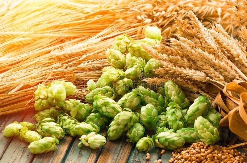 Lúpulos verdes, malte, orelhas da cevada e grão do trigo foto de stock royalty free