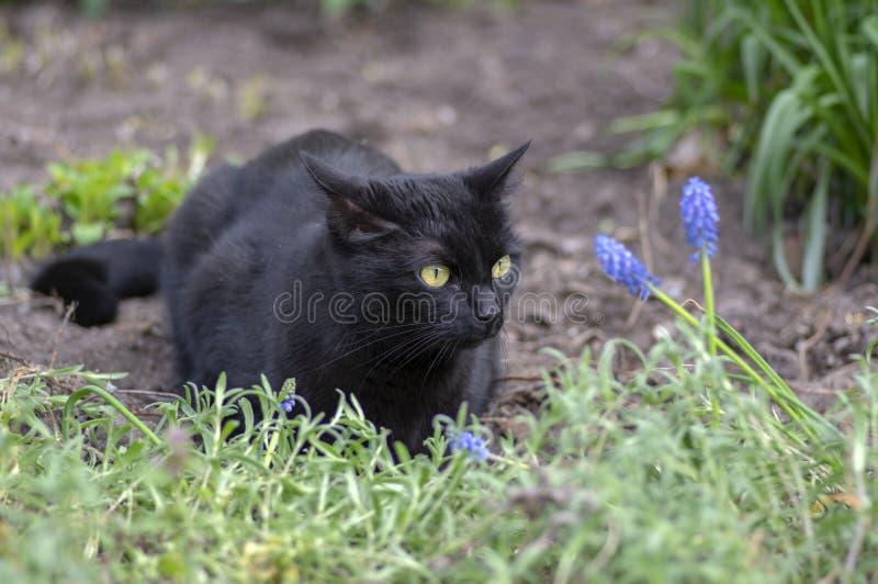 L?ge der schwarzen Katze in der Wartezeit im Garten, dunkles Tier mit hellgr?nen Augen, sch?nes Tier stockbilder