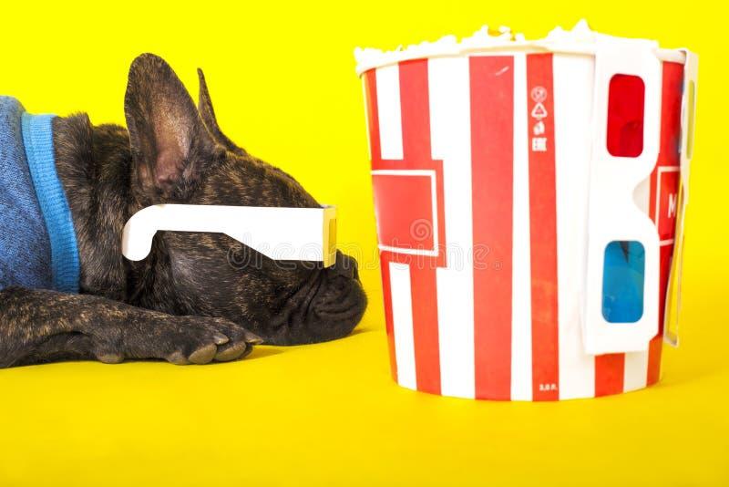 L?gen der Hundefranz?sischen Bulldogge in den Gl?sern 3d mit Popcorn auf gelbem Hintergrundnahaufnahmeportr?t stockfotografie