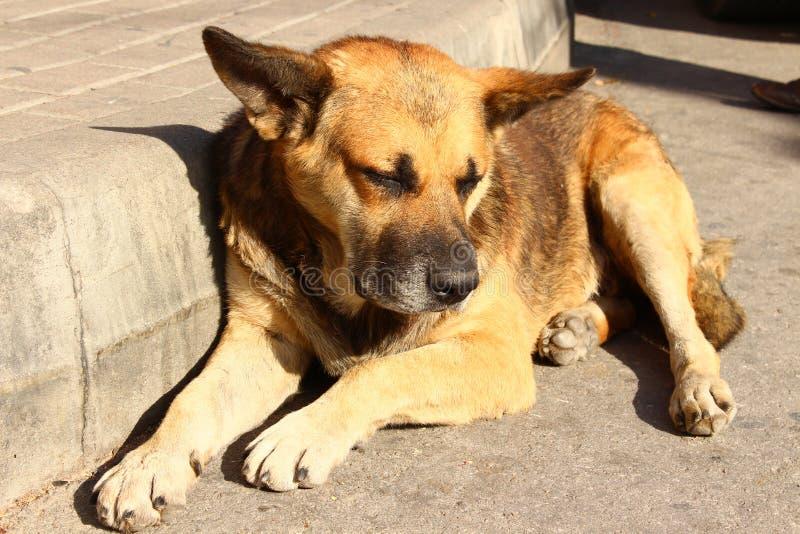 Lügen des streunenden Hundes lizenzfreies stockfoto