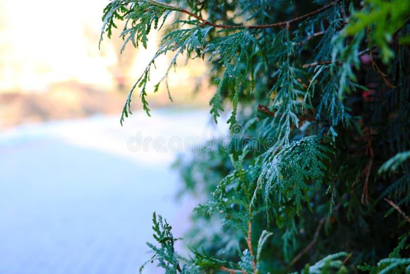 Lügenschnee nach den letzten Schneefällen Das Bild wurde die Wintersaison eingelassen lizenzfreie stockfotos