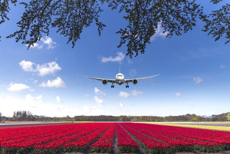 Lądować na tulipanu czerwonym chodniku zdjęcie royalty free
