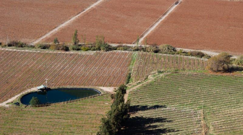 Ląduje z rolniczą uprawą przed podnosić żniwo w jesieni, Pisco Elqui, Chile zdjęcie stock