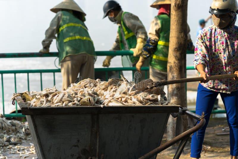 L'éboueur, travailleurs d'environnement prennent les poissons morts de masse du lac images stock