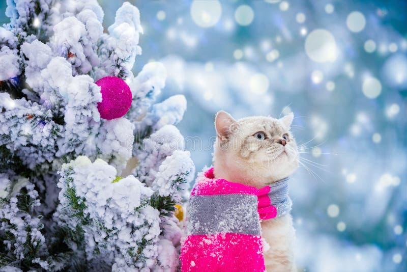 L'écharpe de port de chat se repose près de l'arbre de Noël photo libre de droits