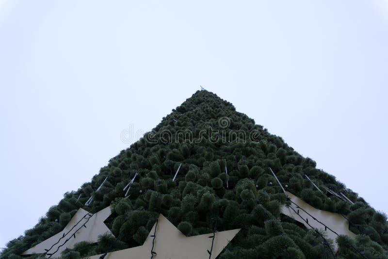 L'éclairage de l'arbre de Noël image libre de droits