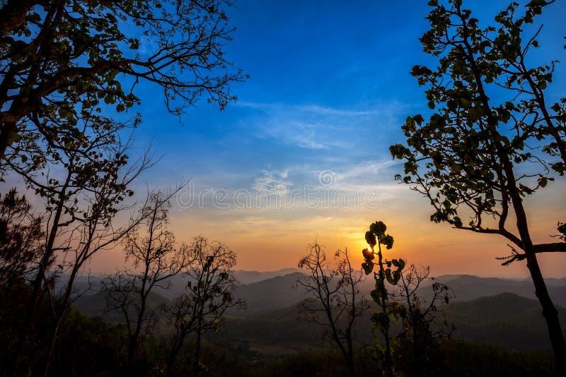 L'éclat léger d'or sur l'arbre pendant le coucher du soleil en premier plan et ciel bleu/orange a éclaté à l'arrière-plan image libre de droits