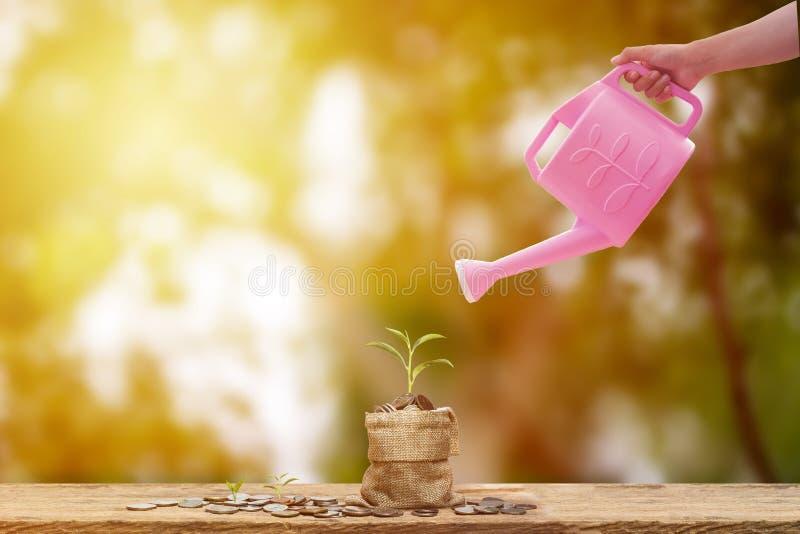 L'économie et l'investissement conceptuels remettent tenir la boîte d'arrosage rose image stock