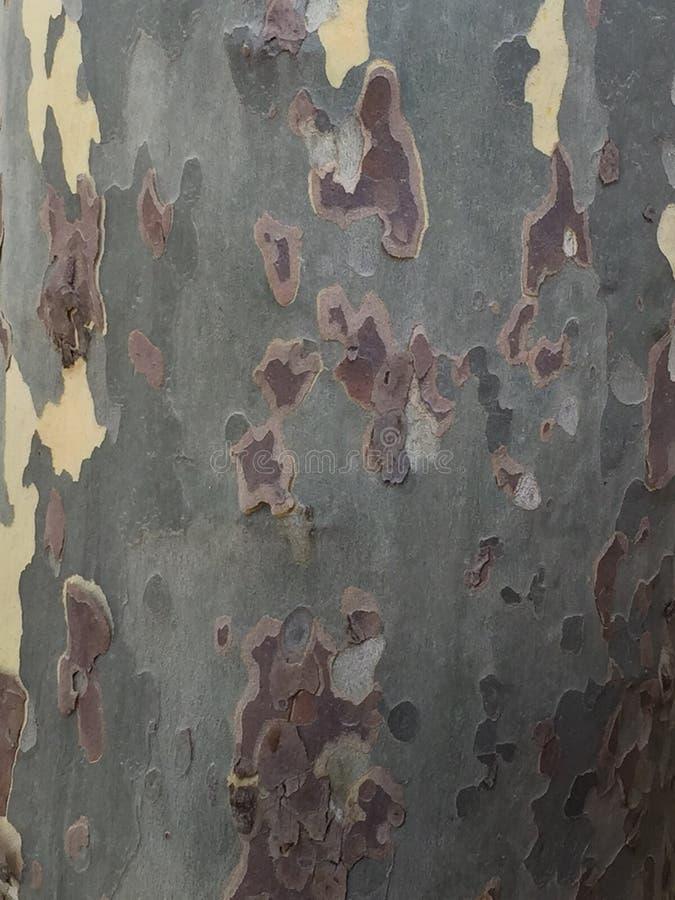 L'écorce d'arbre photo stock