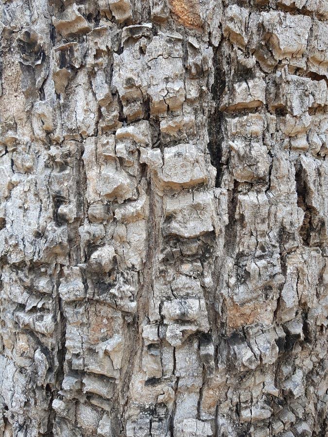 L'écorce d'arbre de Brown donnent à la fente une consistance rugueuse de 02 fonds images libres de droits