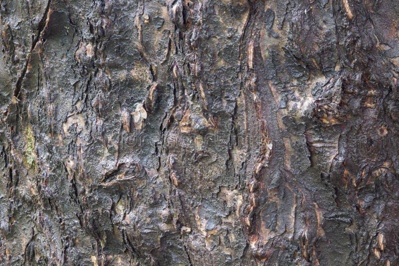 L'écorce d'arbre moite après pluie images stock