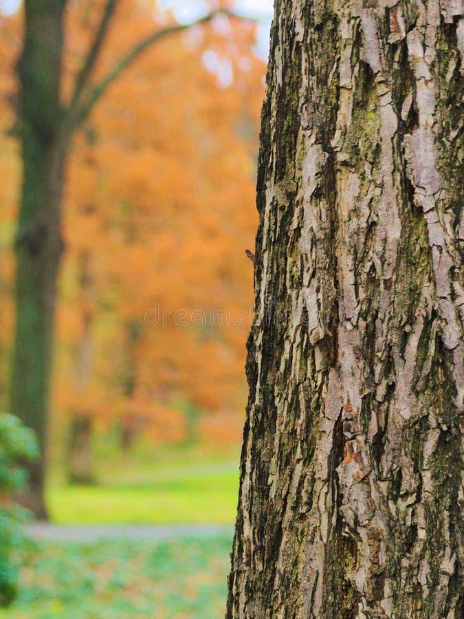 L'écorce d'un arbre photographie stock