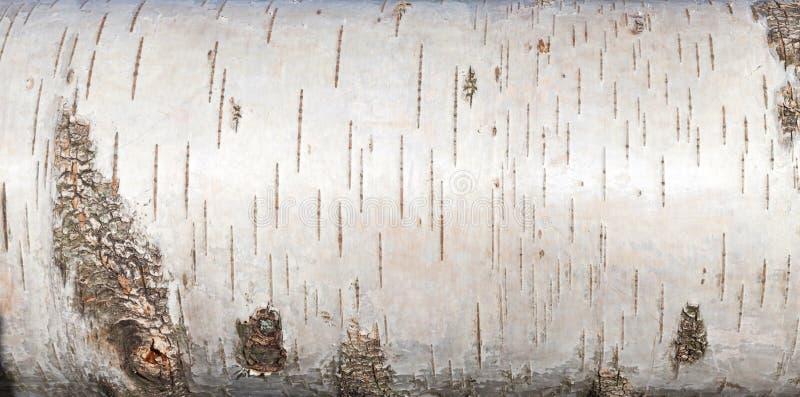 L'écorce de bouleau blanc, se ferment vers le haut de la texture de fond image libre de droits