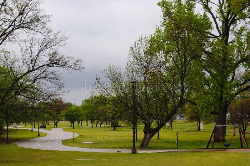 L'écureuil sur la route et les oiseaux humides a dispersé sur l'herbe une journée de printemps humide en parc image libre de droits