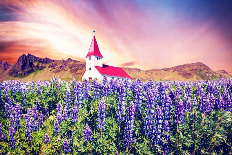 L'église célèbre Vikurkirkja de Vik et fleurs de loup en Islande à l'aube Endroit de p?lerinage Paysage impressionnant magique photographie stock libre de droits